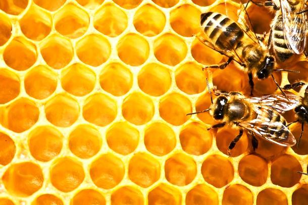 Photo of Pobjegle mu pčele pa izbole goste banje