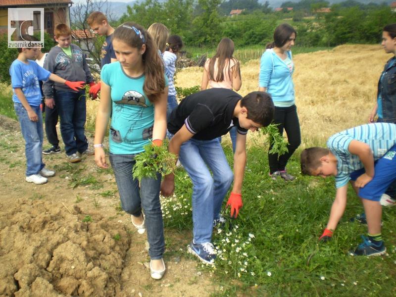 "Photo of Realizovan projekat ""Ambrozija napada! Stop!!! Mobilizacija""! (foto)"