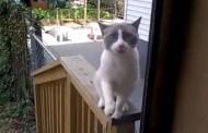 Mačka koja je svašta ispričala... (video)