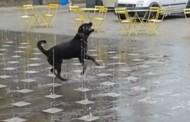 On je najsrećniji na svijetu: Pas trčkara u fontani (video)
