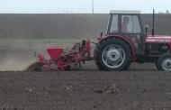 Pšenica zasijana na 550 hektara
