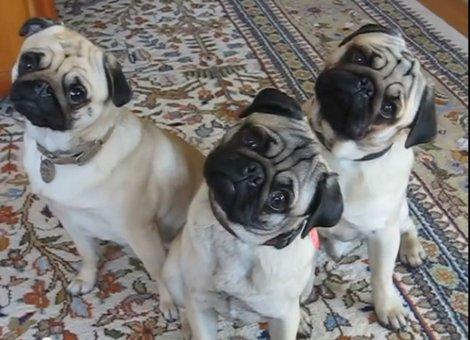 Photo of Evo zašto vaši kućni ljubimci naginju glavom kada im nešto govorite