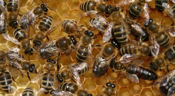 Photo of Misteriozni nestanak pčela u Modriči