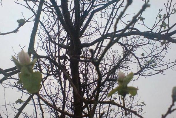 Procvjetalo voće predviđa oštru zimu