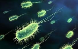 Odzvonilo antibioticima, imaju novi mamac za bakterije?