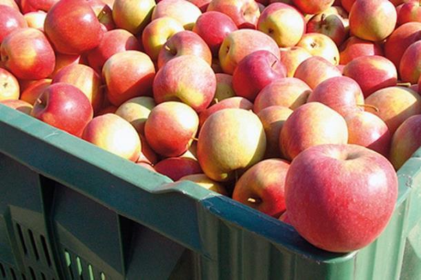 Sad sumnjiv krompir i jabuke