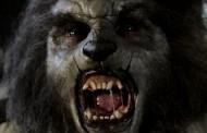 KOMŠIJE U STRAHU: Seljak iz Novog Sela iskopao glavu vukodlaka?!
