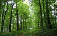 Bespravna sječa šume na lokalitetu Klotjevac kod Srebrenice