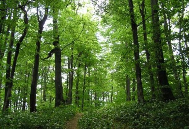 Photo of Bespravna sječa šume na lokalitetu Klotjevac kod Srebrenice