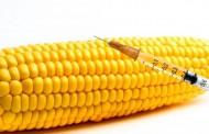 Na GMO pozitivno 67 odsto uzoraka!