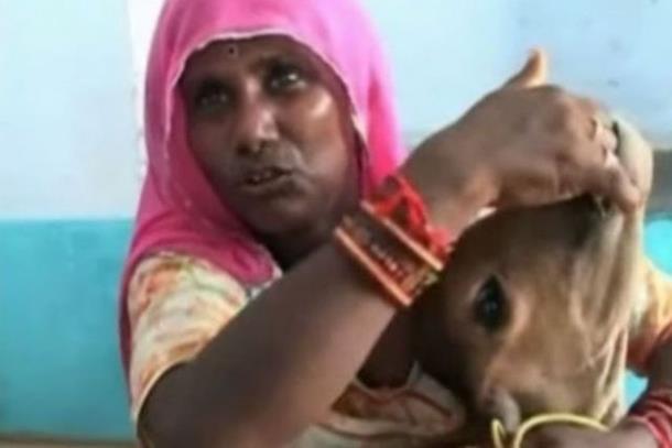 Indijka doji tele svojim mlijekom (video)