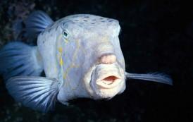 Snimljena riba na najvećoj dubini