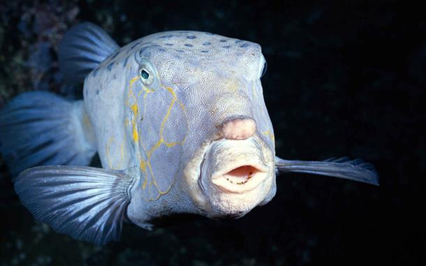 Photo of Snimljena riba na najvećoj dubini
