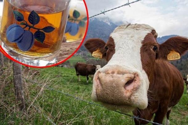 Rakijom liječio krave muzare!
