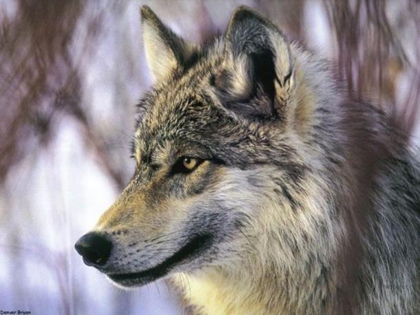 Photo of Šta vaša omiljena životinja govori o vašem karakteru?