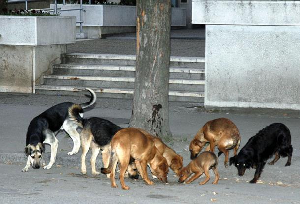 Sve veći broj pasa lutalica u Srpskoj