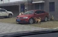Pas lutalica uništio auto muškarcu koji ga je udario