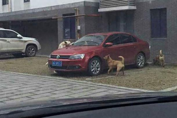 Photo of Pas lutalica uništio auto muškarcu koji ga je udario