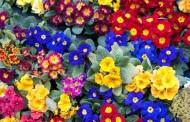 Šta tvoje omiljeno cvijeće otkriva o tebi?