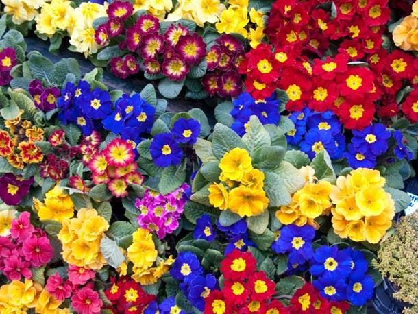 Photo of Šta tvoje omiljeno cvijeće otkriva o tebi?