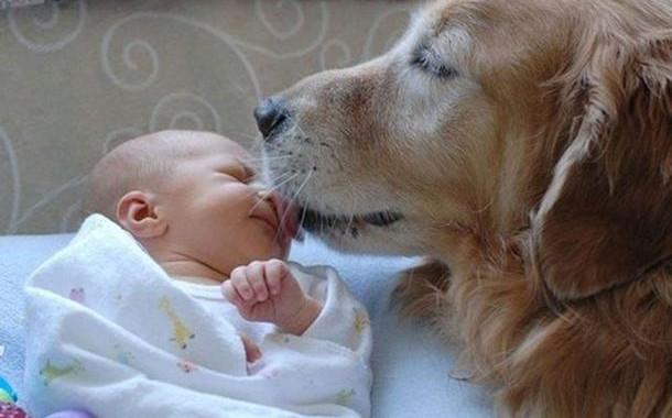 """""""Hormon ljubavi"""" povezuje pse i ljude!"""