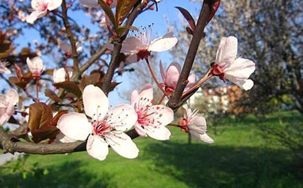 Photo of Danas počinje proljeće