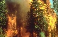 Aktivni požari u opštinama Gacko, Bileća i Berkovići
