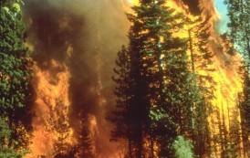 Ugašen požar na Bjelašnici