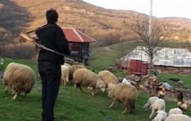 Ona jedina živi u ovom srpskom selu: Nigde ne idem bez puške