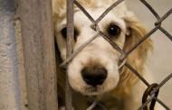 Za nasilje nad životinjama tek opomena ili globa