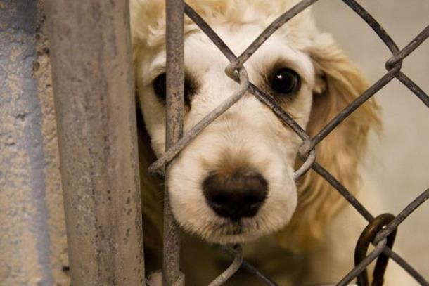 Photo of Za nasilje nad životinjama tek opomena ili globa