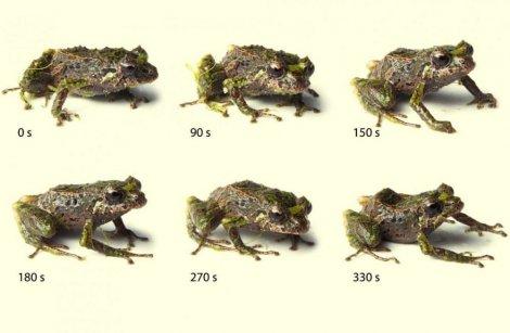 "Photo of ""Transformer"" žaba pronađena u ekvadorskoj džungli"