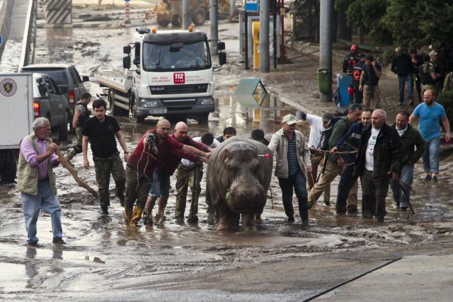 Na ulicama Tbilisija divlje životinje