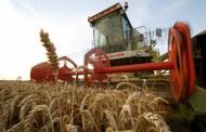 Udruženje mlinara RS: Otkupna cijena pšenice 0,33 KM