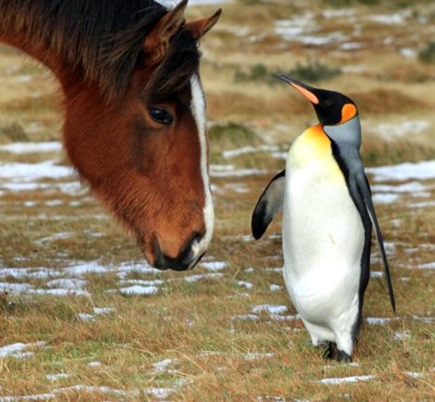 Photo of Emotivni susret konja i pingvina (foto)