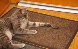 Mačke imaju i hemijsko oružje