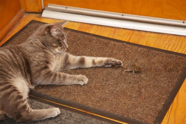 Photo of Mačke imaju i hemijsko oružje