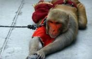 Majmun ukrao torbicu i razbacao dvije hiljade evra