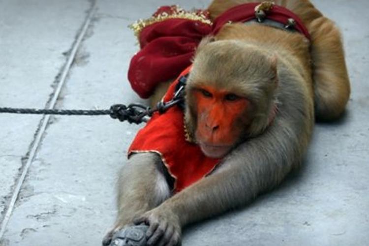 Photo of Majmun ukrao torbicu i razbacao dvije hiljade evra