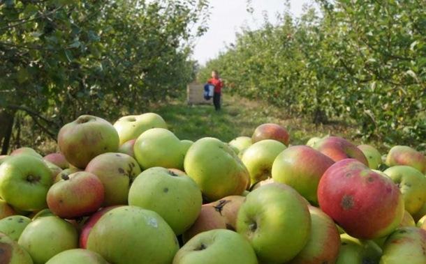 Dobra cijena i izvoz u Rusiju spas za voćare