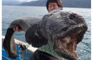 Čudovište iz mora: Da li je riba ogromna zbog radijacije?