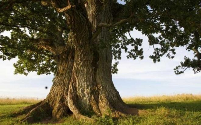 Photo of Drvo otkrilo tajnu staru 1000 godina