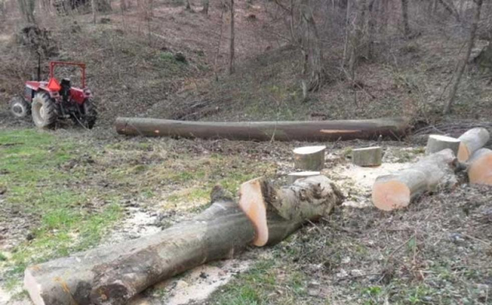 Drvo palo ženi na glavu i ubilo je