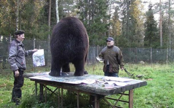 Medvjed slika umjetnička djela