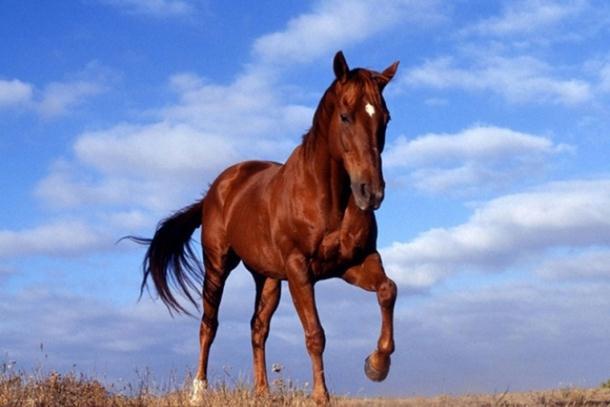 Beograd: Zbog prebijanja konja 6 mjeseci zatvora