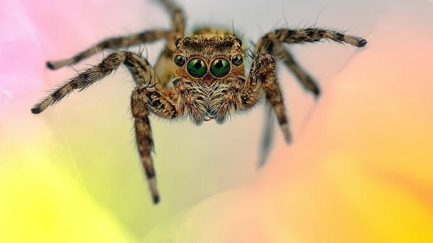 SAMO MIT ILI… BBC odgovara jedemo li uopšte pauke dok spavamo