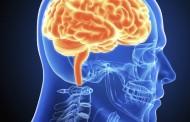 Ljudski mozak je i muški i ženski!
