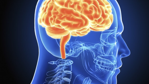 Photo of Ljudski mozak je i muški i ženski!