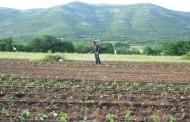 Otkup žitarica povećan za 57 odsto, a krompira za 107 odsto