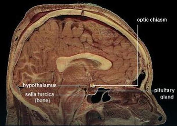 Naučna revolucija Otkriven način kako da daunloudujete znanje u mozak (1)